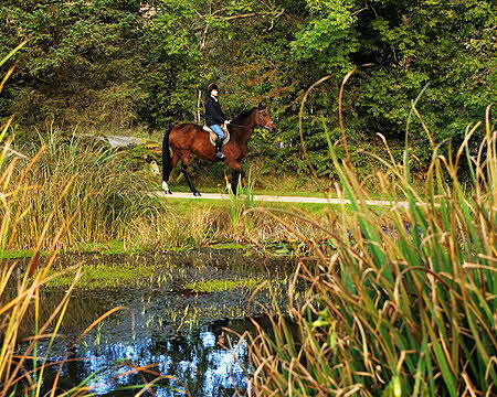 Brook Lodge horse-rider by pond