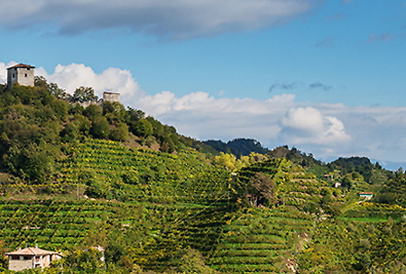 Campania Hillside Vineyard