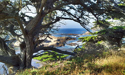Carmel Point Lobos