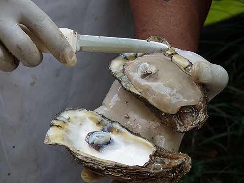 James Beard New Orleans Lunch Oyster Shucking